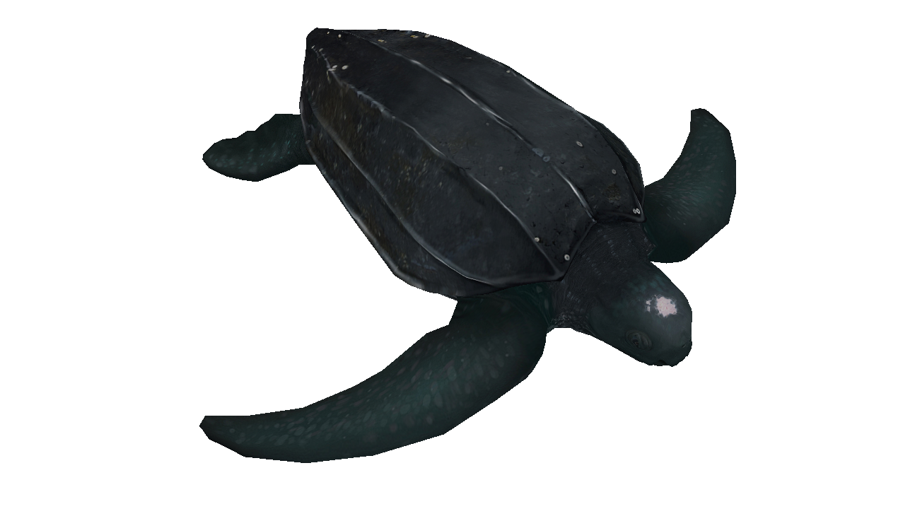 Leatherback Sea Turtle facing right illustration