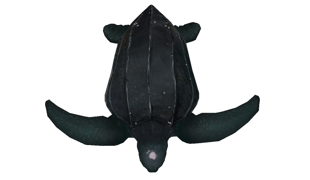 Leatherback sea turtle facing down illustration
